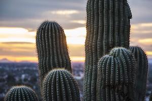 rsz_NW_cactus